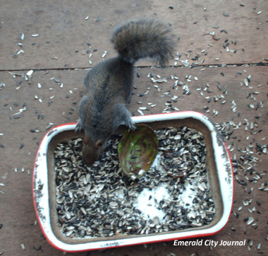 Blacky...Get out of my seed dish!  