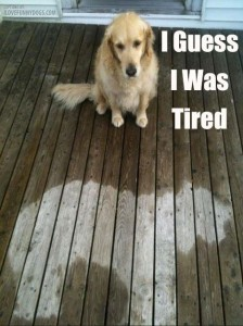 Funny Dog Pic