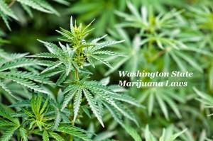Washington State Marijuana Laws