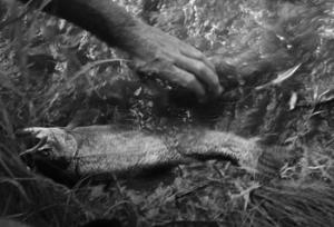 Mike Asimos Fishing Trip