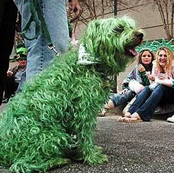 St Paddy's Day Dog Funny Photo